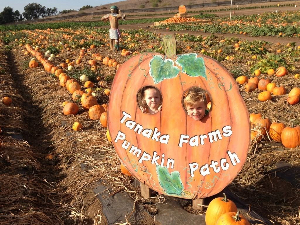Cotton And Sons Pumpkin Patch Torrance