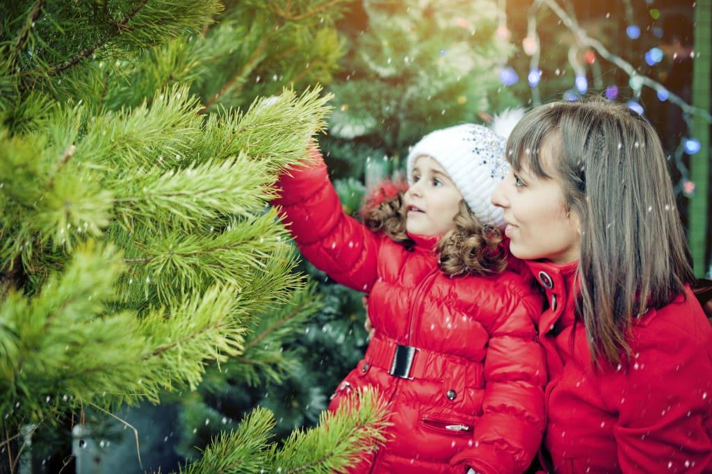 Christmas Tree Ranch