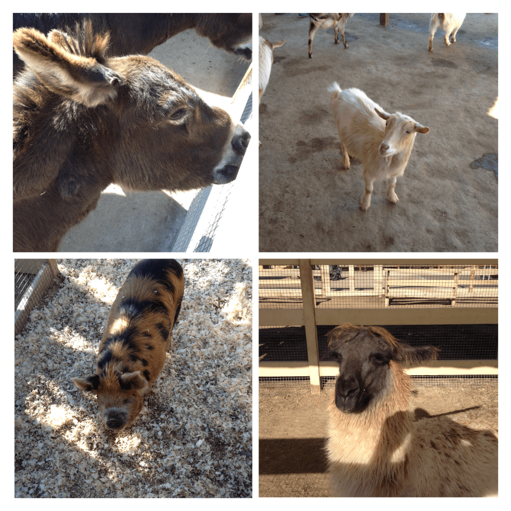 A Field Trip To Zoomars Petting Zoo Plus A Giveaway Socal Field