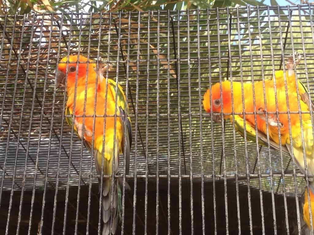 Birds at Oasis Camel Farm
