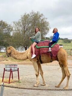 Camel Rides Ramona