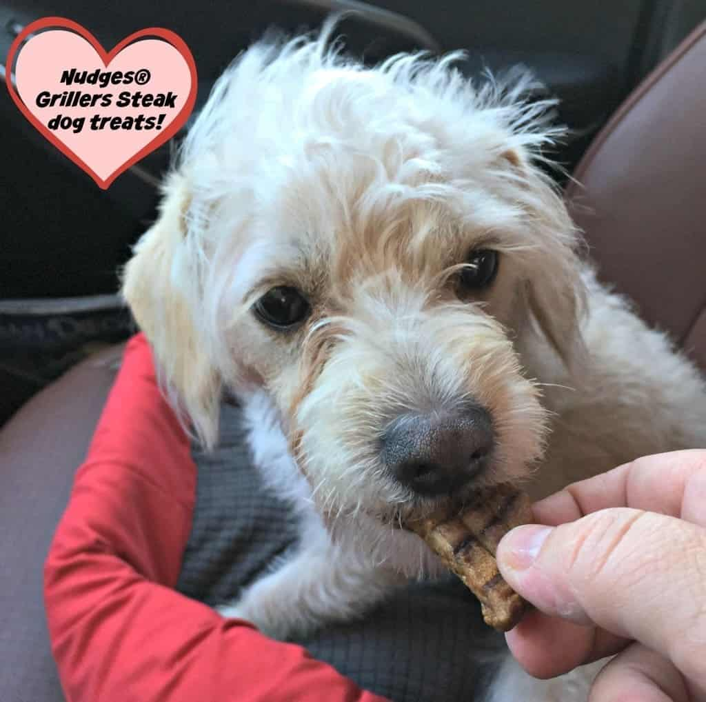 Nudges® dog treats are about rewarding the unconditional love your dog gives you with treats you can trust. It's about celebrating the love you share, love that deserves to be rewarded.