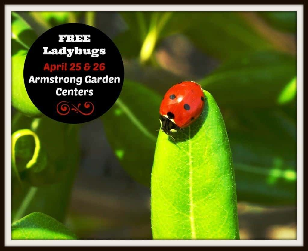 Free Lady Bugs at Armstrong Garden Center, April 25-26, 2015