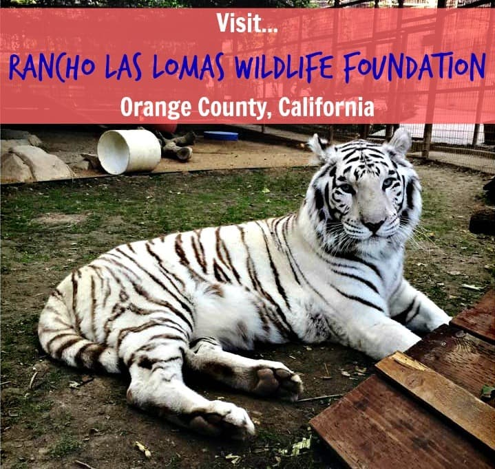Rancho Las Palmas Wildlife Foundation is a small non-profit wildlife rescue located on a very large open-air property in the foothills of Orange County, California. They host educational tours and field trips throughout the year.