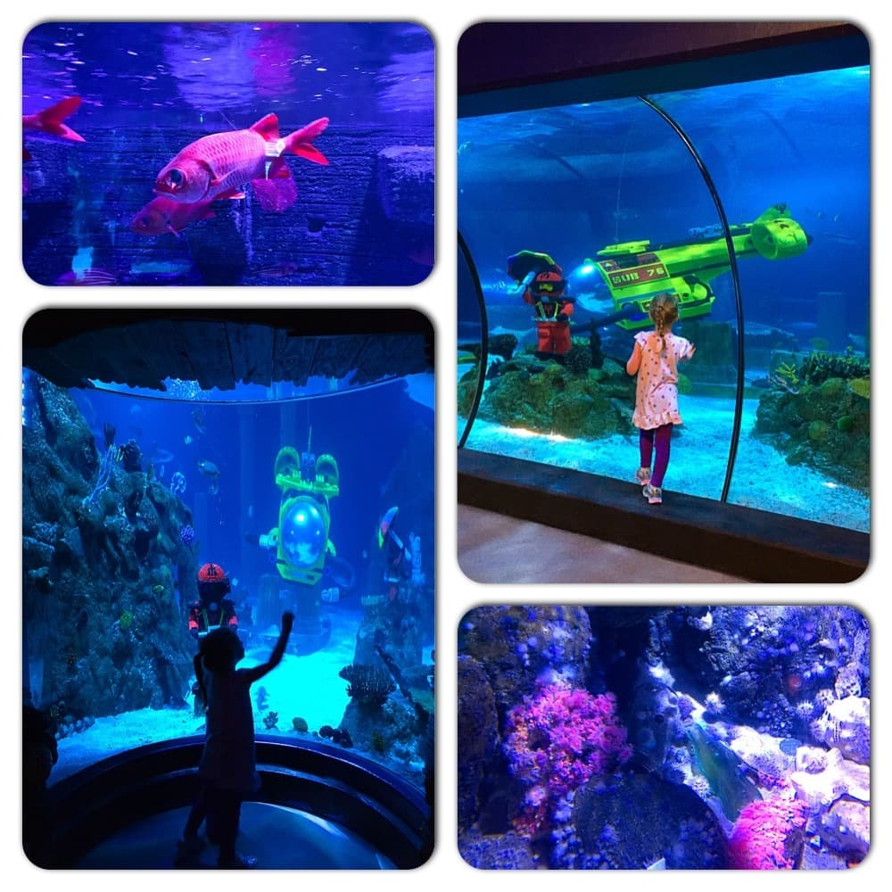 SEA LIFE Aquarium is your child's first interactive guide to the life of the sea, combining active hands-on learning with fascinating educational talks, and up close encounters with sea creatures including sharks, octopus & rays!
