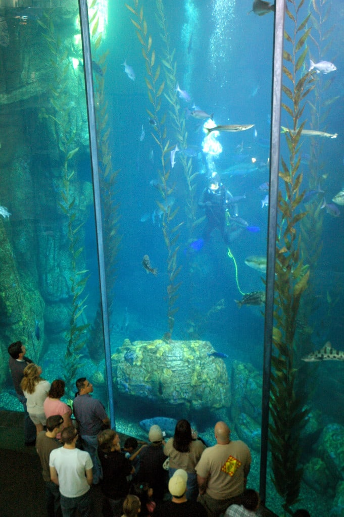 Attend Homeschool Days at The Aquarium of the Pacific on September 14 and 15.
