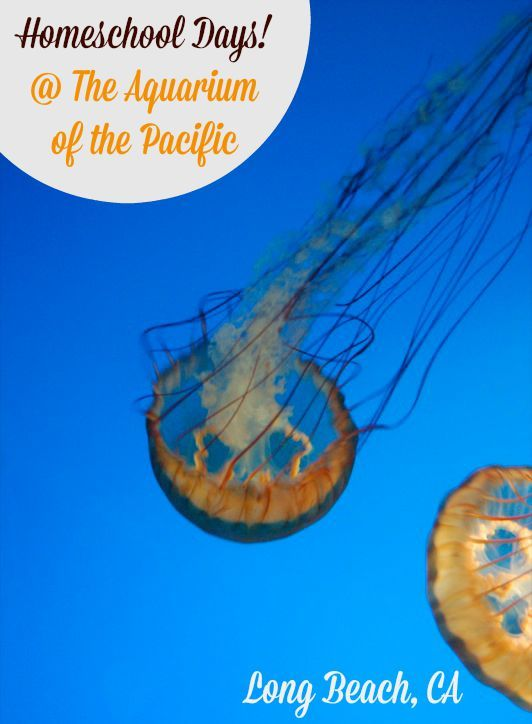 Attend Homeschool Days at The Aquarium of the Pacific on September 16 and 17!