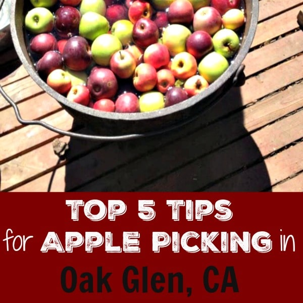 Are you looking for a unique place to take your family this fall? Check out Oak Glen's Apple Picking Season in Oak Glen, California. The season officially kicks off over Labor Day weekend and runs now through Thanksgiving weekend. The apple crop is good this year and the majority of farms officially start welcoming visitors in September.