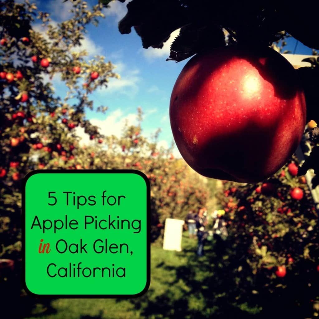 5 Tips For Apple Picking In Oak Glen