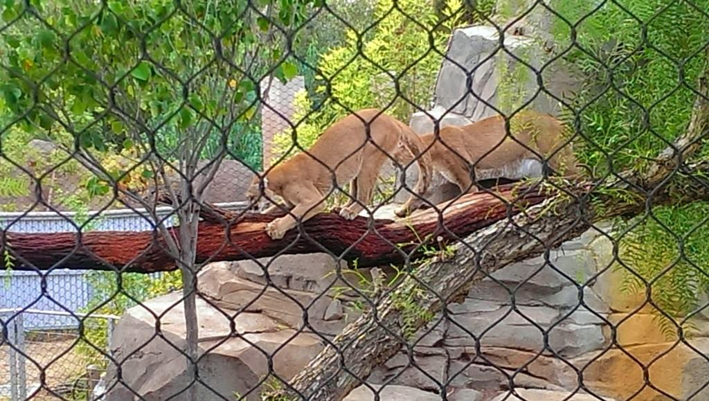 5 Must See Animals At The San Diego Zoo