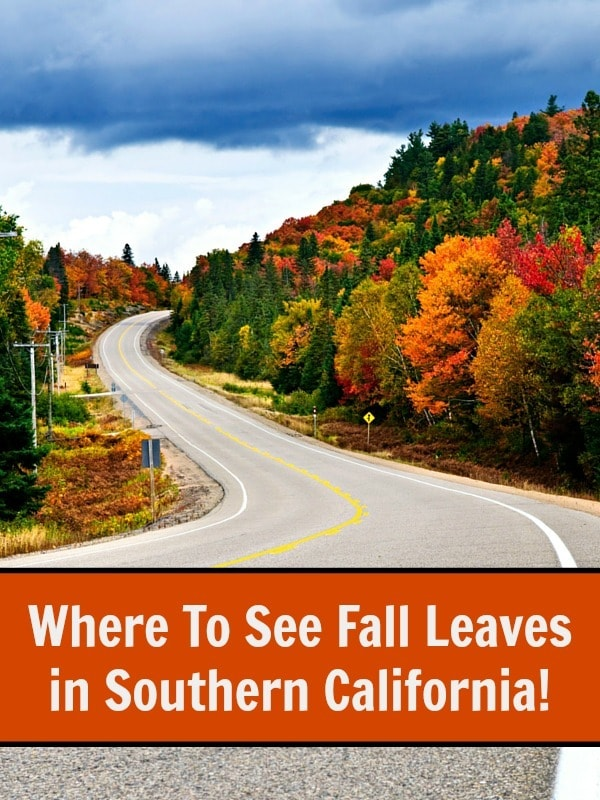 Where To See Fall Leaves in Southern California