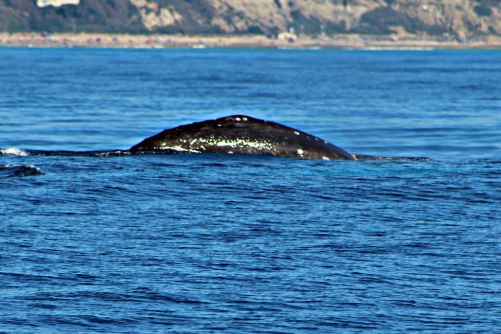 5 Ways to Enjoy Dana Point Festival of Whales