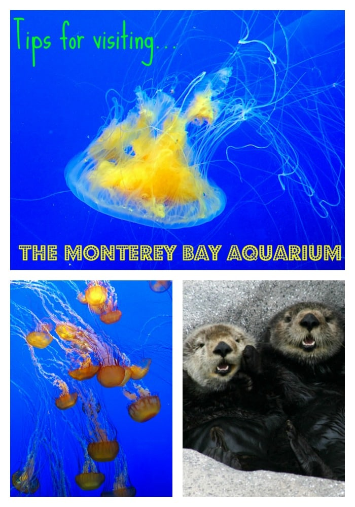 Monterey-Bay-Aquarium-Home-School-Day-and-Field-Trips-For-Students