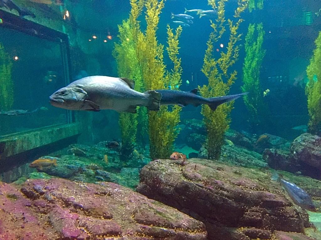 Tips for visiting the Monterey Bay Aquarium