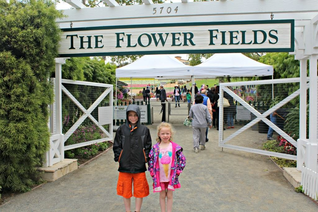 The-Flower-Fields-in-Carlsbad-are-open-March-May-every-year-7