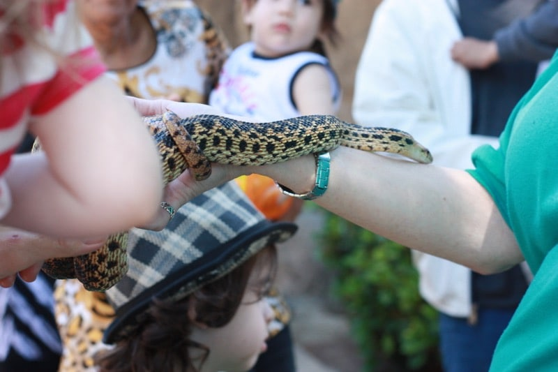 From Earth Day (April 23) until Endangered Species Day (May 22) from 10 am to 4 pm, the L.A. Zoo will host Wild For The Planet. Wild For The Planet offers a variety of activities , entertainment and shared resources about the importance of protecting our planet and its animals.