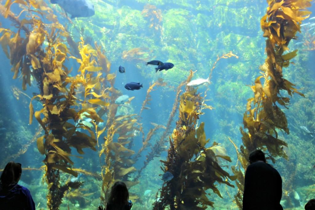 The Birch Aquarium at Scripps in La Jolla is a quaint aquarium that sits on top of a hillside and provides spectacular views of the Pacific Ocean. The aquarium has more than 5,000 animals representing 380 species. The Hall of Fishes has everything you might want to see - starfish, jelly fish, octopus, crabs, seahorses, turtles and more.