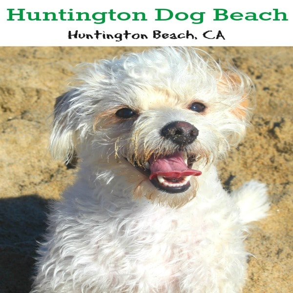 Huntington Dog Beach is located in Huntington Beach, California and is 1.5 miles of pure doggy paradise. Dogs can frolic freely off-leash in the waves and chase other pooches into the sunset.