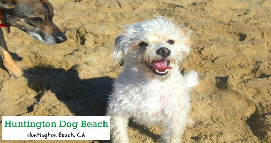 Dog Friendly Beaches Socal