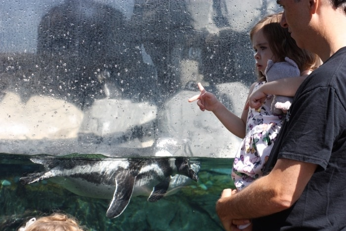 Does your child like to go to the aquarium? Then check out the educational classes for kids ages 2-17 years old at the Aquarium of the Pacific in Long Beach.