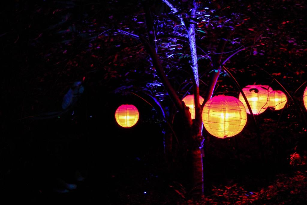 This holiday season, Descanso Gardens in Los Angeles, California will be transformed into Enchanted Forest of Light - an interactive, nighttime experience, featuring a one-mile walk through 10 distinct lighting displays in some of the most beloved areas of the gardens.