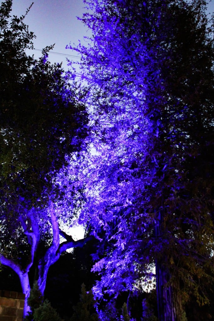 Discount tickets to enchanted forest of light at descanso - Descanso gardens enchanted forest of light ...