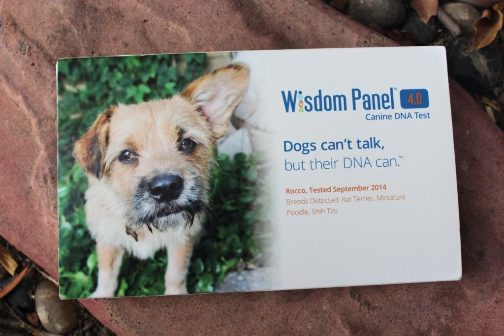 Are you interested in testing your dog's DNA to find out what type of breed he is? Check out Wisdom Panel! They have largest breed database on the market covering 250 breeds, types and varieties. It is quick, easy and efficient with results coming back as early as 2 weeks after receiving the test.