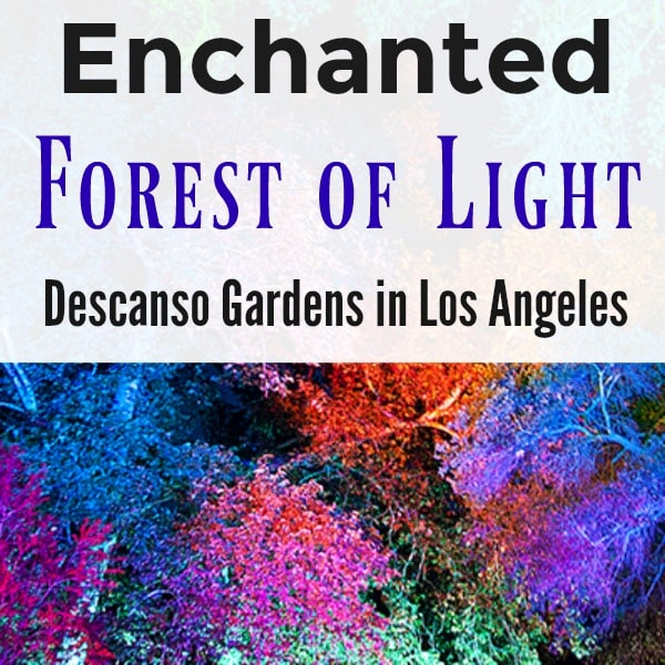 Discount coupons for enchanted forest