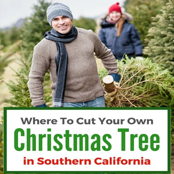 Christmas Tree in Southern California