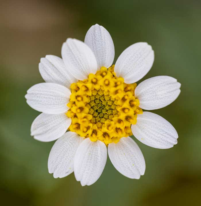 Are you planning a vacation to California to see the wildflowers in the spring? Then check out this list of 8 Places To See Wildflowers in the California Desert before you visit.