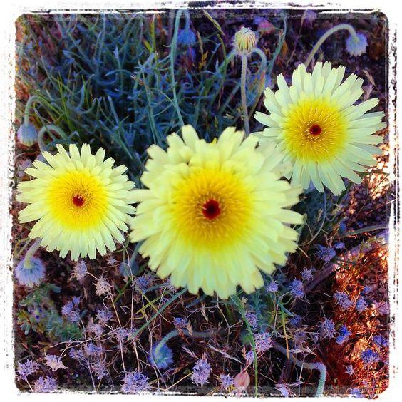 Best Places To See WildFlowers In Riverside & San Bernardino
