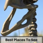 Are you raising a future paleontologist or love fossil digs yourself? Then check out this list of the Best Places To See Dinosaurs and Fossils in Southern California with your family!