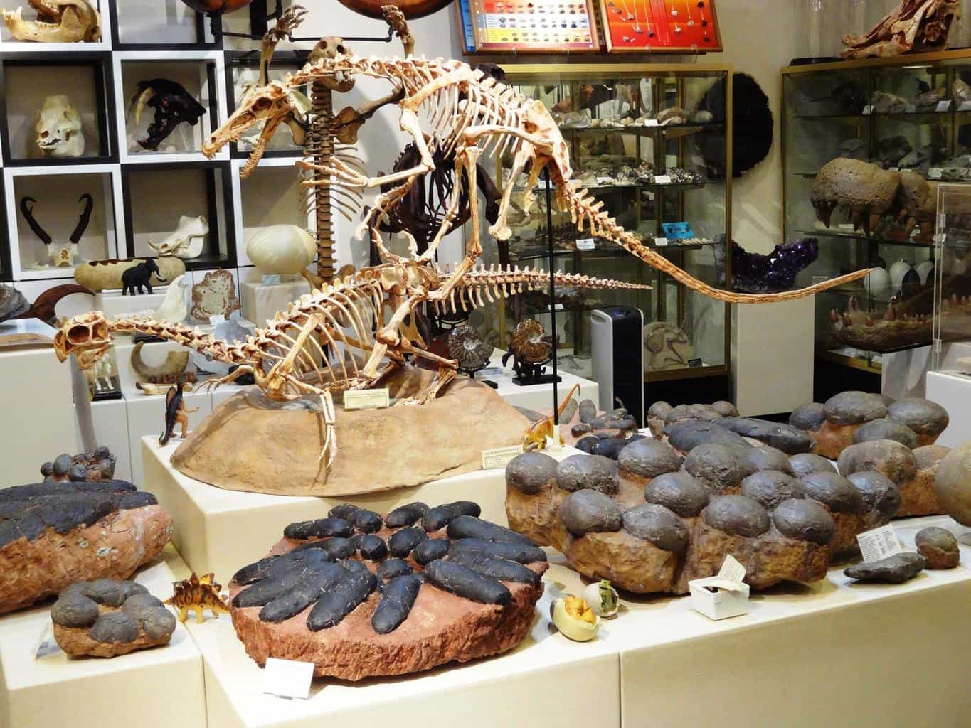 Check out this list of the Best Places To See Dinosaur Fossils in San Diego!