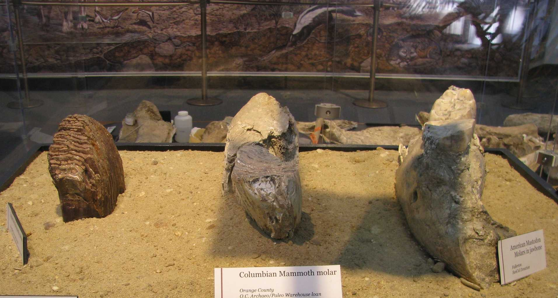 Check out this list of the Best Places To See Dinosaur Fossils in Orange County!