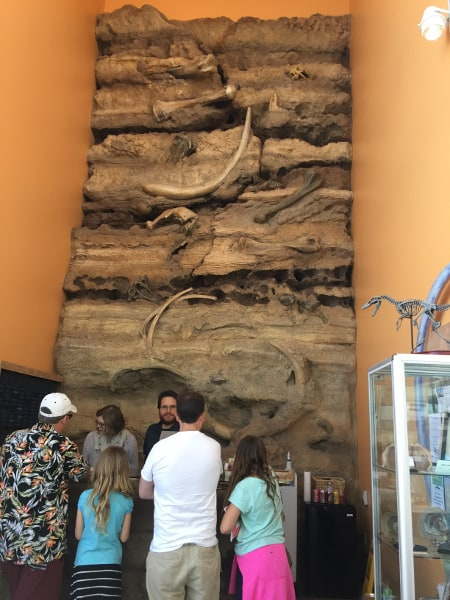 Are you raising a future paleontologist or love fossil digs yourself? Then check out this list of the Best Places To See Fossils in Southern California with your family!