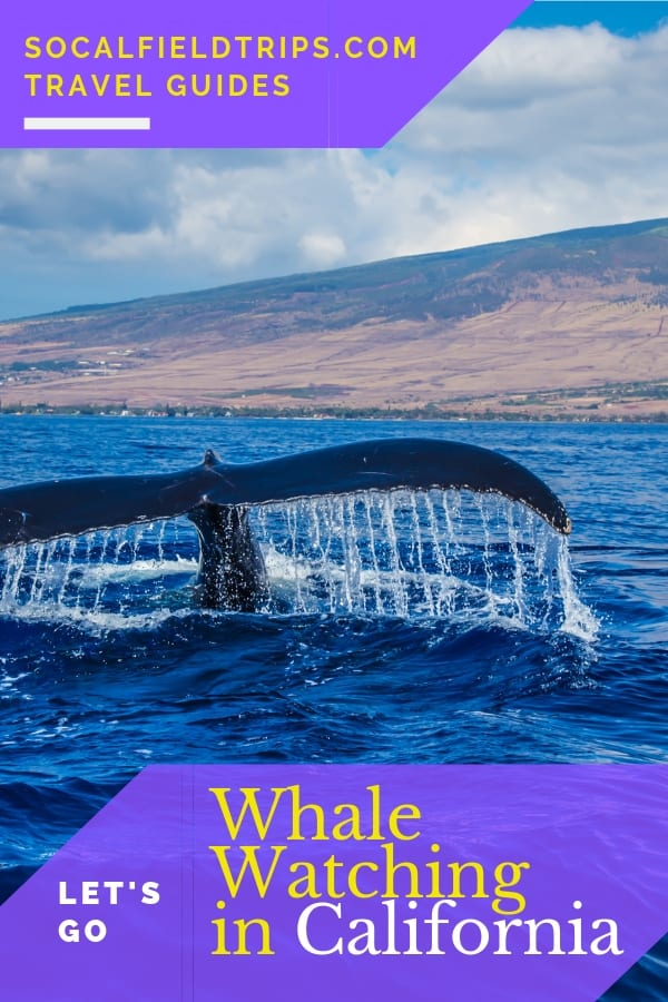 Do you love whales? Learn when and where to go whale watching in California during whale watching season, which runs from mid-December through April.