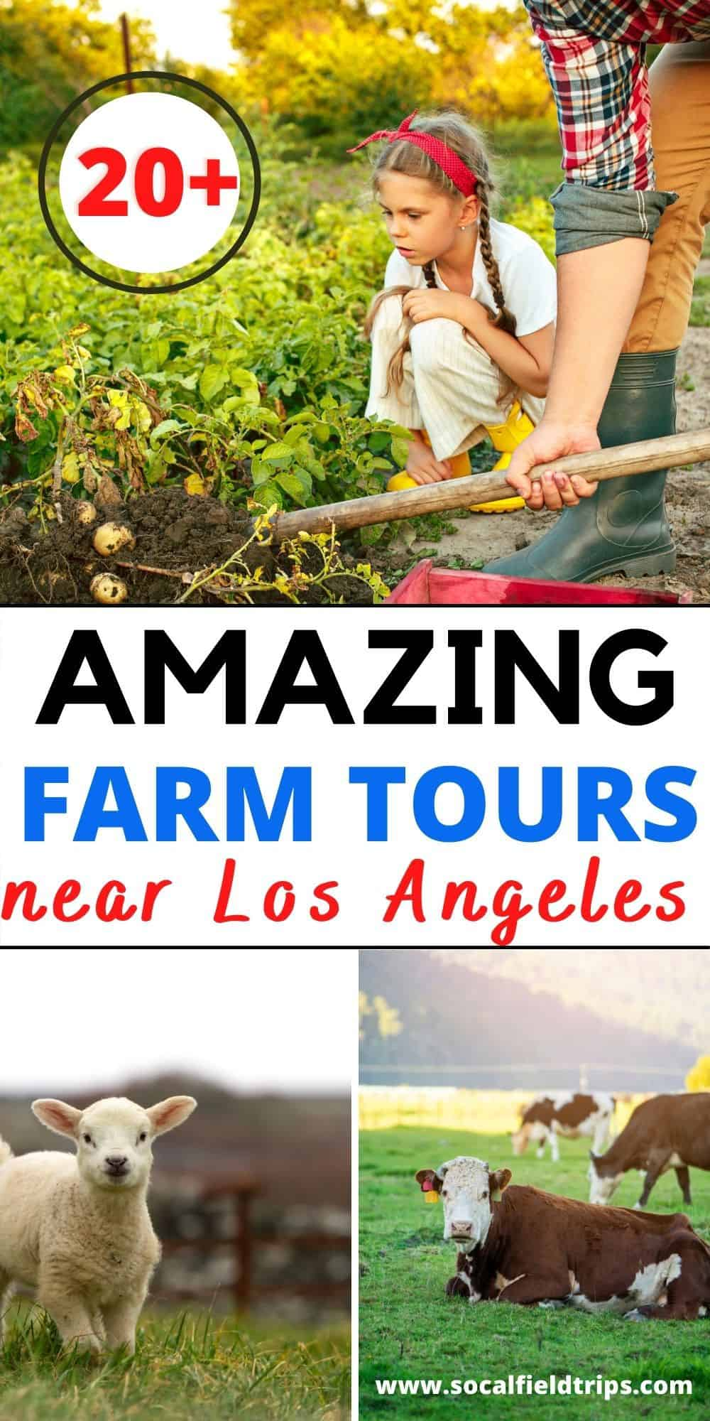 Check out this list of the best family farms near Los Angeles including Ventura, Orange, San Diego, Riverside and Santa Barbara Counties. This is an opportunity for students to learn about a real working farm in their local area.