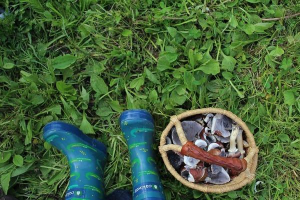 Mushroom Science Experiment For Kids