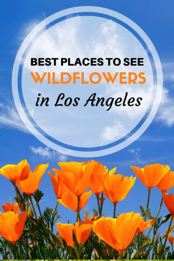 Where to see wildflowers in Los Angeles