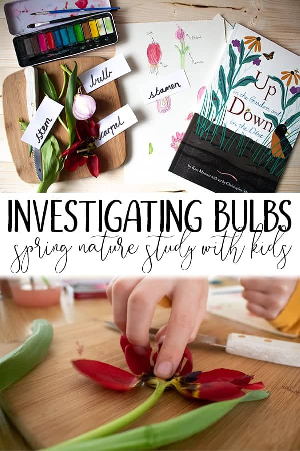 Investigating flower bulbs nature study for homeschoolers