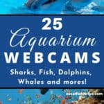 Are you teaching a unit about the ocean? Check out this list 25 Aquarium Webcams from some of the best aquariums from around the world to compliment your lesson plans! #homeschooling #homeschool #homeschoolschedule #homeschoolife #homeschoolmom #homeschooler #homeschooling #onlinelearning #ocean #sealife #otters #penguins #fish #sharks #whales #sealions