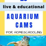 25 Aquarium Cams For Homeschooling