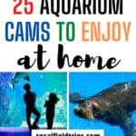 Are you teaching a unit about the ocean? Check out this list 25 Aquarium Webcams from some of the best aquariums from around the world to compliment your lesson plans!