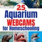 25 Aquarium Webcams For Homeschooling