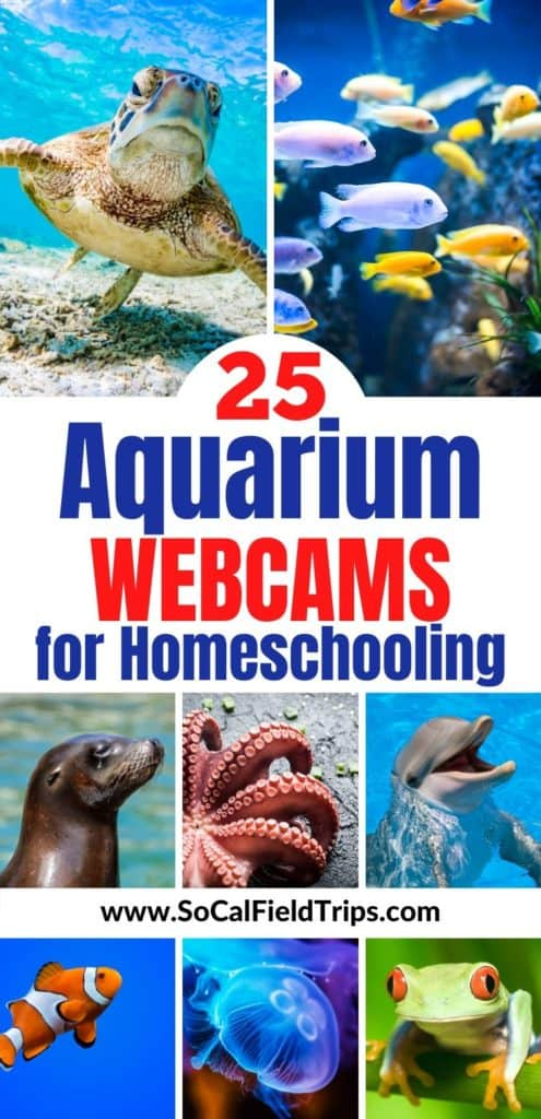 25 Aquarium Webcams For Homeschooling