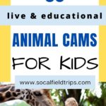 35 Live Animal Cams For Homeschooling Families