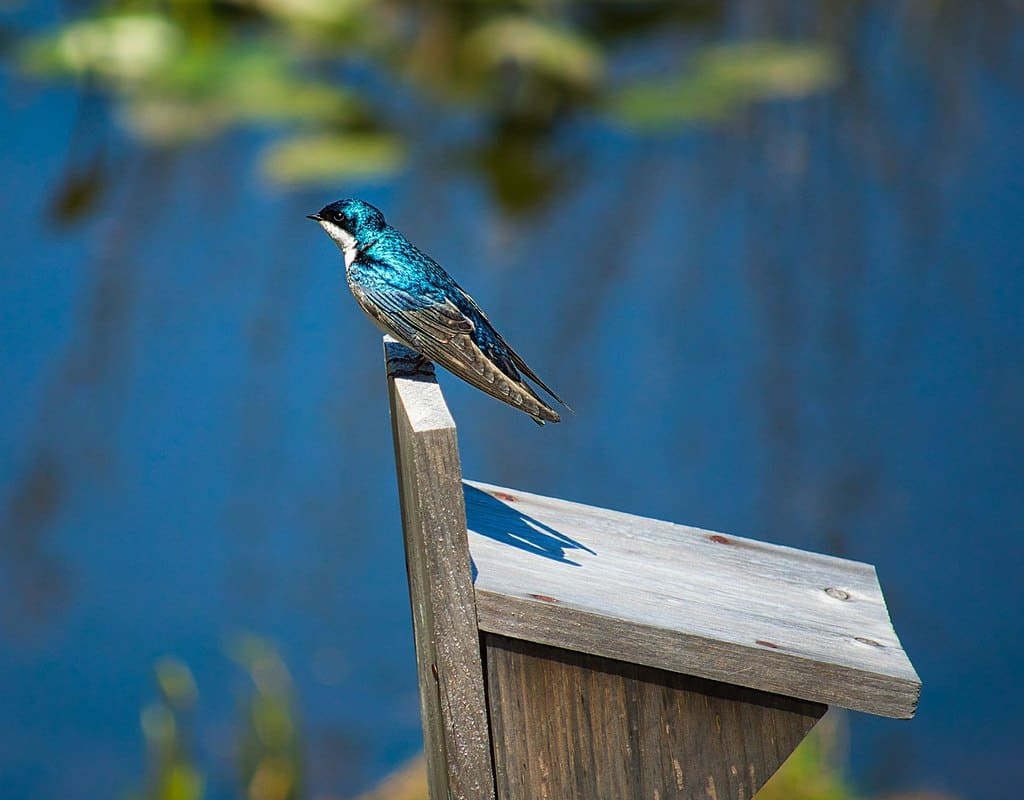 Where to go bird watching in San Diego California