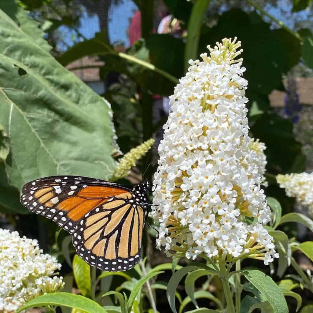 Butterfly Farms in Encinitas
