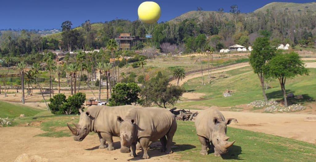 Discount Tickets San Diego Zoo Safari Park