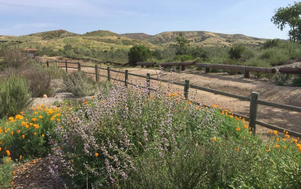 Things to do outdoors in San Diego like visiting Mission Trails Regional Park
